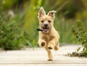 Hunde OP Versicherung lohnenswert
